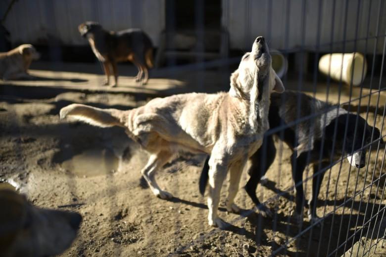 """Centro """"Animal Paraíso"""" centro de bienestar animal de Valparaíso."""