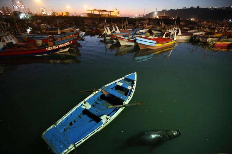 San Antonio Chile 05 de Julio 2016 Pesca Pescadores Artesanales actividad al atardecer en el Puerto Pesquero Artesanal Lonja Pesquera. Foto: Cristian Socrates Orellana.