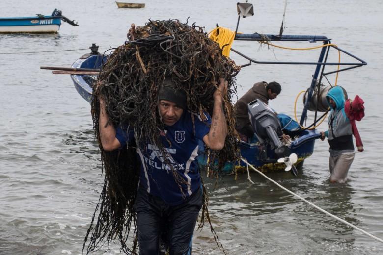 Caleta Errazuriz es un asentamiento de recolectores costeros que trabajan el alga huiro frente a la Isla Santa María. Foto: Matías Quilodrán.