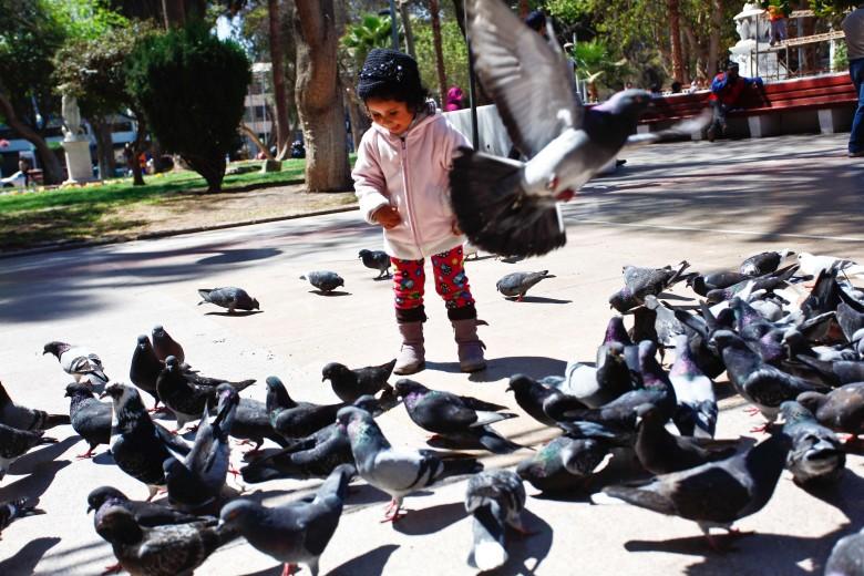 Foto del día: Una niña juega con las palomas en la Plaza de Armas de Copiapó