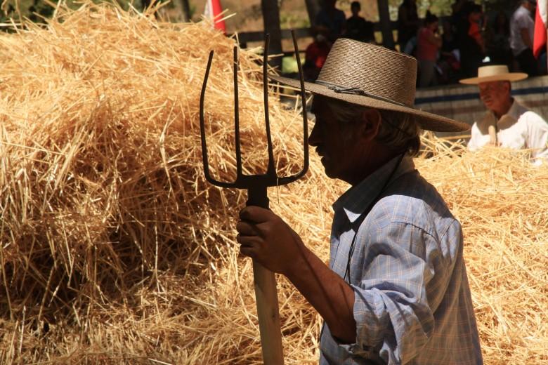Fiesta de la Trilla en Santa Juana región del Biobio.