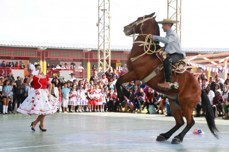 """""""plumazo"""" es el unico caballo Antofagastino que baila cueca y su ultima presentación fue en la escuela las rocas, donde fue ovacionado por el publico asistente."""